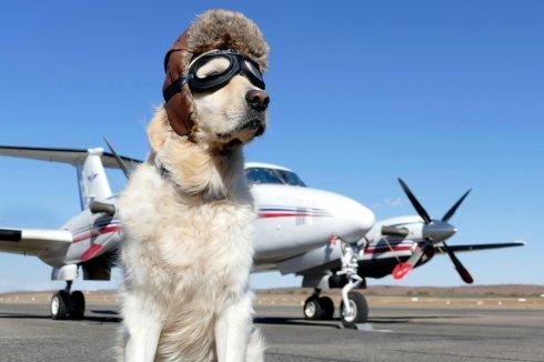 chien pilote